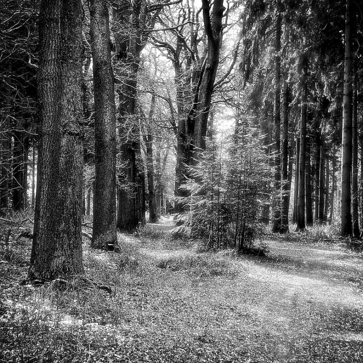 Trees800