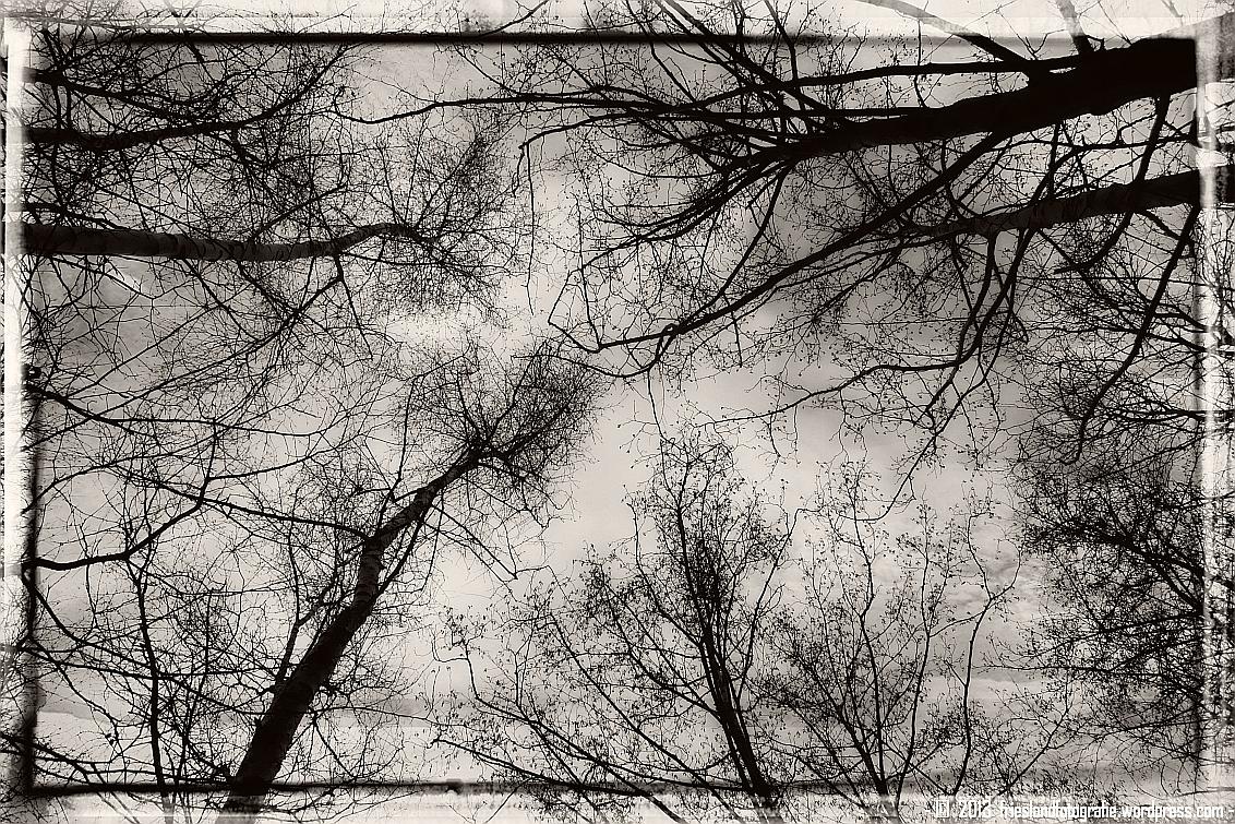 Zwart wit bomen – friesland fotografie