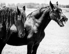 paarden-1-3