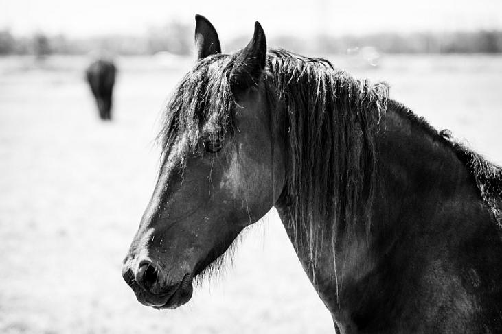 paarden-1-4