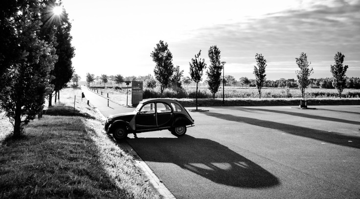 Frieslandfotografie207