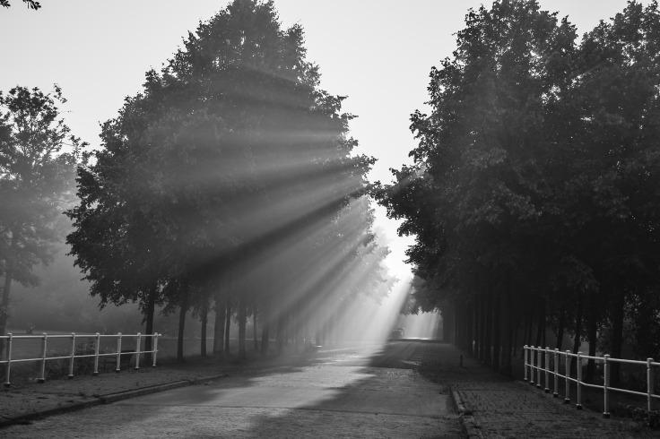 Frieslandfotografie_283